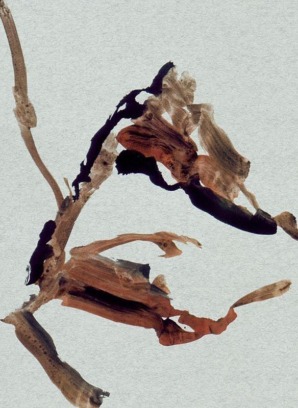 Leopold-Ganzer-1985-Ohne-Titel-48x60.jpg